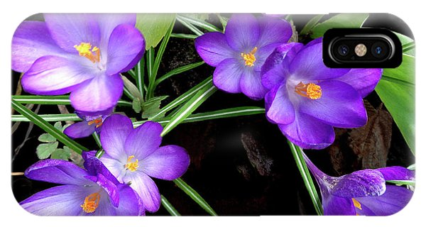 Crocus First To Bloom IPhone Case