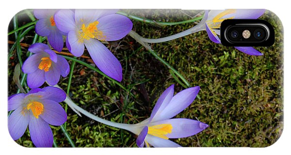IPhone Case featuring the photograph Crocus Outreach by Roger Bester