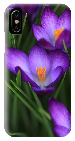 Crocus Vividus IPhone Case