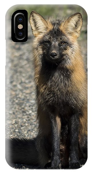 Cross-fox Wonder IPhone Case