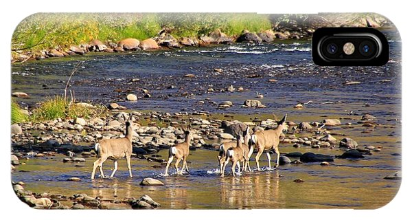 White Tailed Deer iPhone Case - Crossing The River by Donna Kennedy