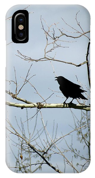 Crow In Sycamore IPhone Case