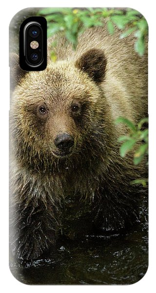 Bear Creek iPhone Case - Cubby by Chad Dutson