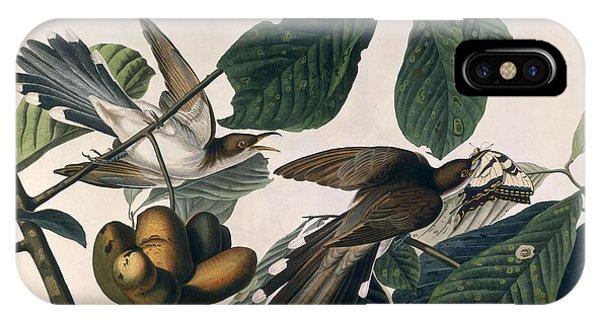 1851 iPhone X Case - Cuckoo by John James Audubon