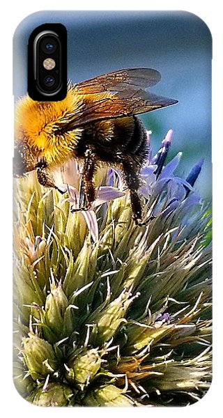 Curious Bee IPhone Case