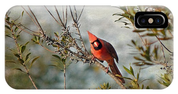 Curious Cardinal IPhone Case