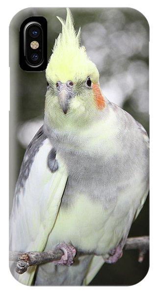 Curious Cockatiel IPhone Case