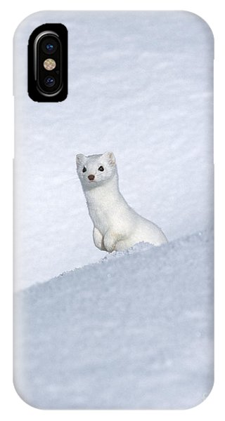 Curious Ermin IPhone Case