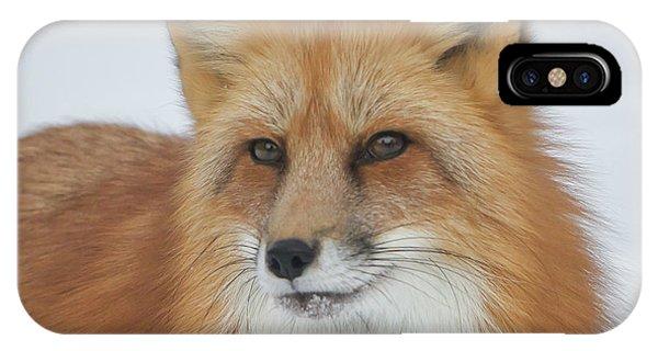 Curious Fox IPhone Case