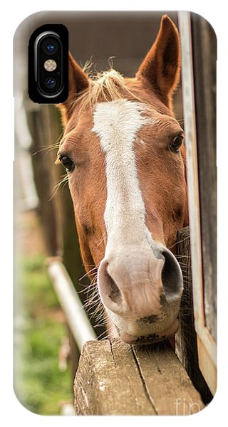 Curious Horse IPhone Case