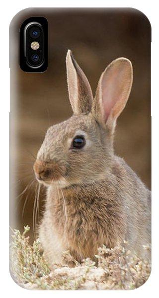 Curious Kit IPhone Case