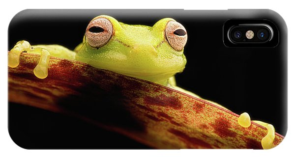 Curious Little Amazonian Tree Frog IPhone Case