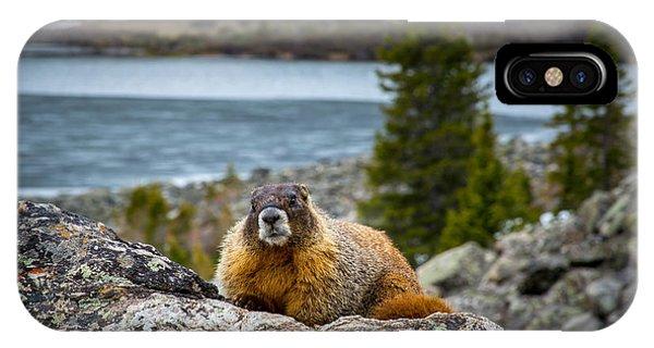 Curious Marmot IPhone Case