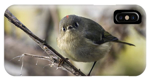 Curious Ruby-crowned Kinglet IPhone Case