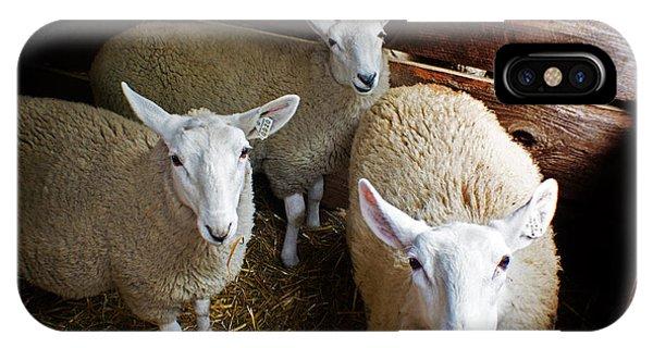 Curious Sheep IPhone Case
