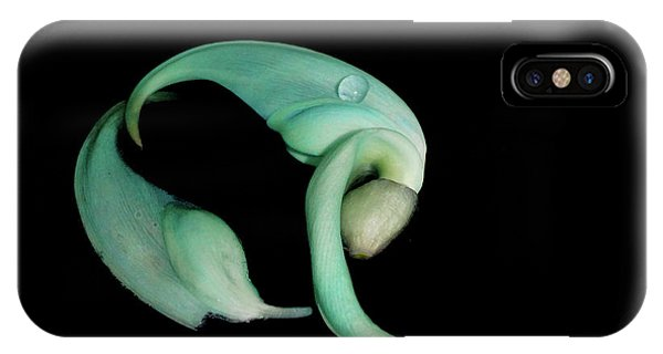 Curled Together IPhone Case