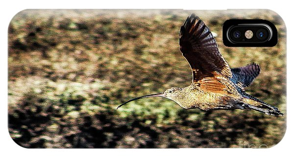 Curlew In Flight IPhone Case