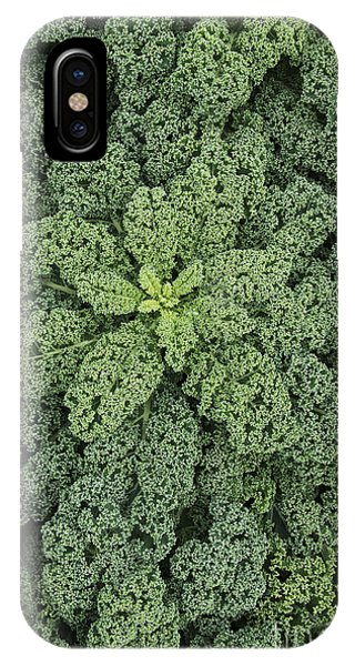 Hybrid iPhone Case - Curly Kale by Tim Gainey