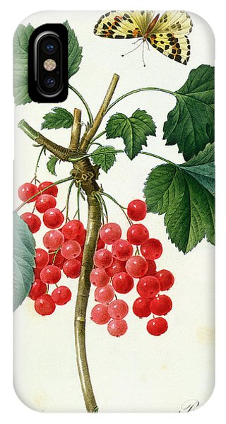 Redoute iPhone Case - Currants  Red by Pierre Joseph Redoute