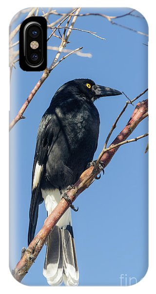 Currawong IPhone Case