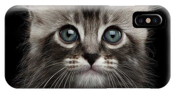 Cute American Curl Kitten With Twisted Ears Isolated Black Background IPhone Case
