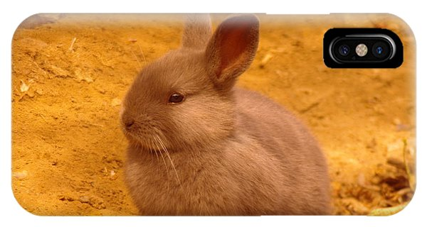 Little Things iPhone Case - Cute Bunny by Jeff Swan