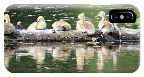 Cute Canadian Geese Chicks Phone Case by Pierre Leclerc Photography