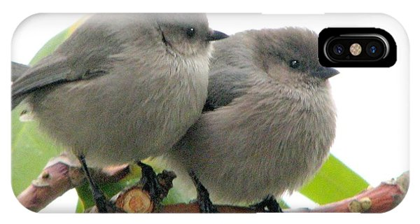 Cute Chicks IPhone Case