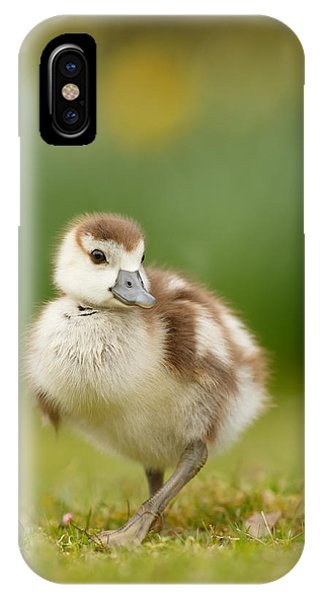 Goslings iPhone Case - Cute Gosling by Roeselien Raimond