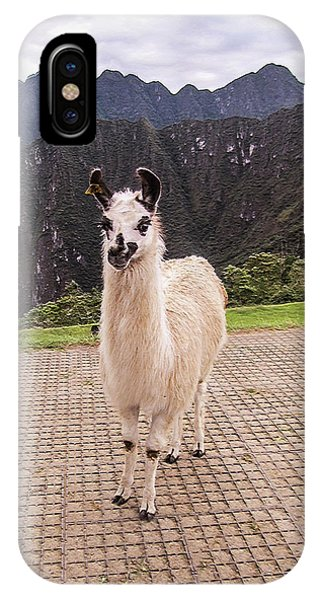 Cute Llama Posing For Picture IPhone Case