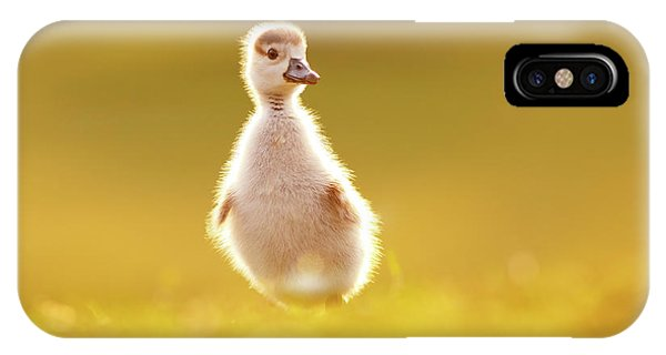 Gosling iPhone Case - Cute Overload - Baby Gosling by Roeselien Raimond