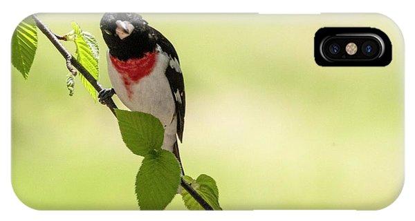 Cute Rose-breasted Grosbeak IPhone Case
