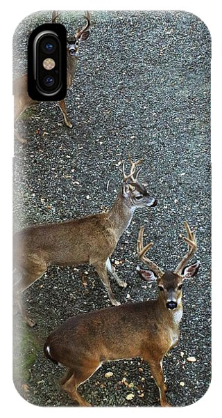 IPhone Case featuring the photograph D8b6353 3 Mule Deer Bucks Ca by Ed Cooper Photography