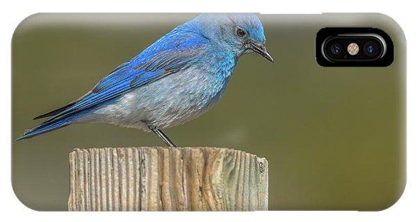 Daddy Bluebird Guarding Nest IPhone Case