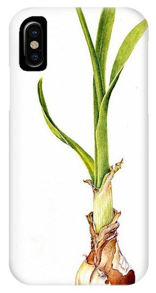 Daffodil And Bulb IPhone Case