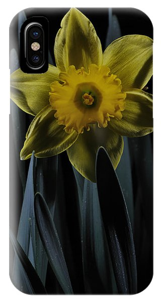 Daffodil By Moonlight IPhone Case