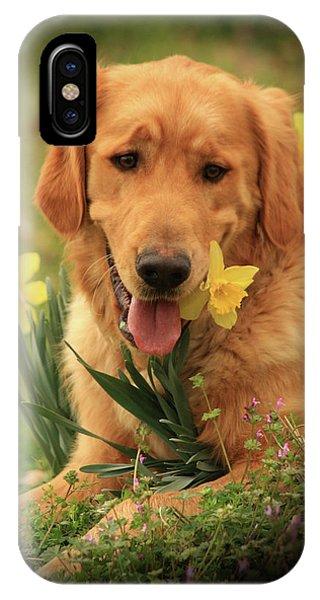 Daffodil Dreams IPhone Case