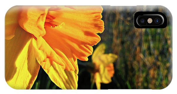 Daffodil Evening IPhone Case