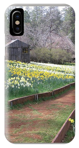 Daffodil Hill Pathway IPhone Case
