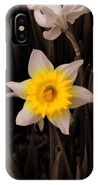 Daffodil IPhone Case