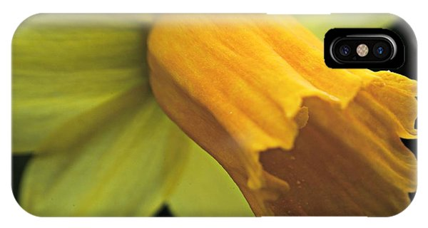 Daffodil - Narcissus - Portrait IPhone Case