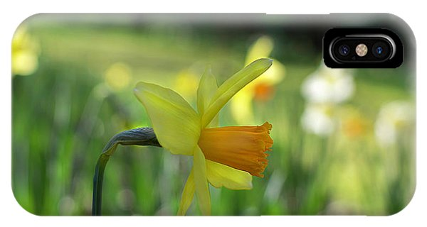 Daffodil Side Profile IPhone Case