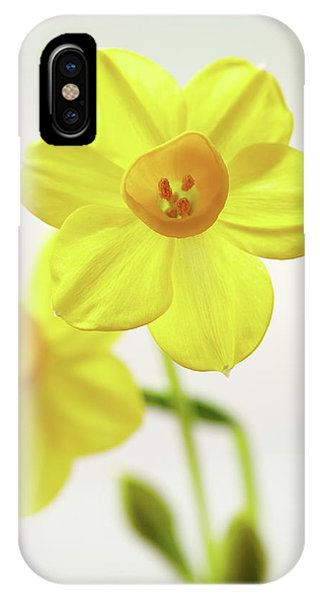 Daffodil Strong IPhone Case