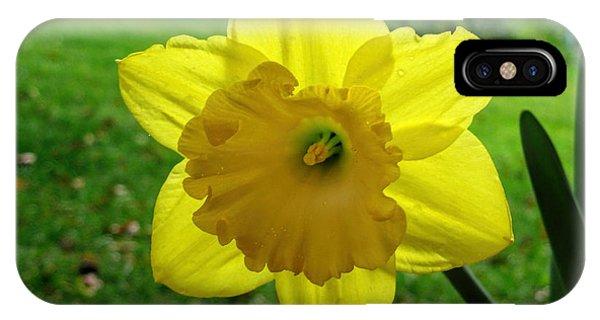 Daffodile In The Rain IPhone Case