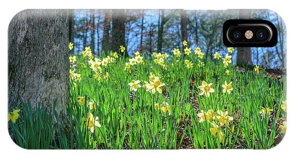 Daffodils On Hillside 2 IPhone Case