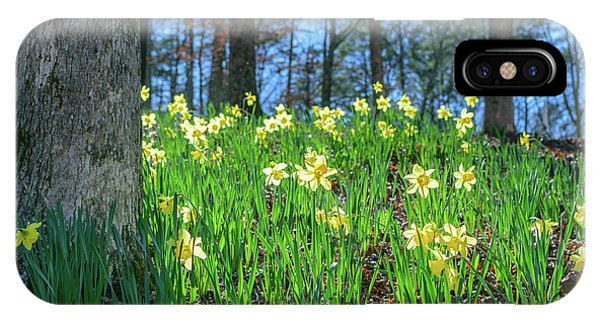 Daffodils On Hillside 2 IPhone Case