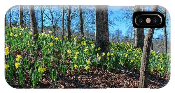 Daffodils On Hillside IPhone Case