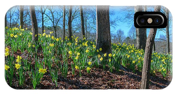 Daffodils On Hillside IPhone Case