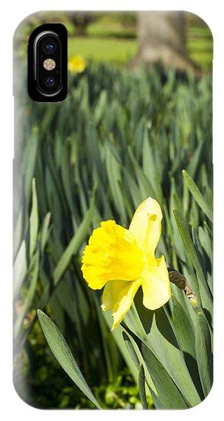 Daffoldil - Arboretum - Madison Wisconsin IPhone Case