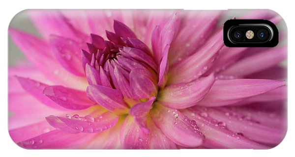 Dahlia After The Rain IPhone Case